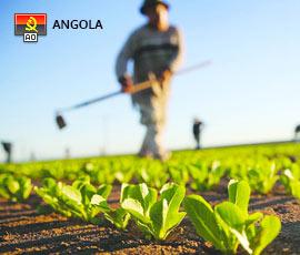Empregos em Agricultura em Angola