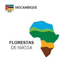 Florestas de Niassa
